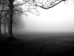 black n white n fog.jpg